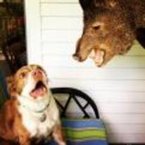 Radnom funny picture tags: dog scared bore pig head