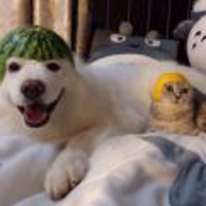 Radnom funny picture tags: dog watermelon cat orange hats