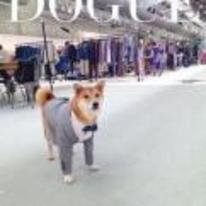 Currently trending funny picture tags: doge dogue dog suit wow