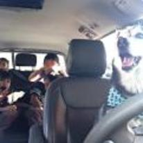 Radnom funny picture tags: dogs-driving-car chill-ive-got-this kids scared screaming