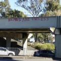 Radnom funny picture tags: dolphins are useless bridge graffiti