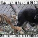 Radnom funny picture tags: dude-you-got-to-protect-me tiger dog cage help