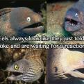 Radnom funny picture tags: eels look told joke reaction