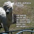 Radnom funny picture tags: emo alpaca says raw heart