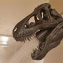 Radnom funny picture tags: epic shower t-rex skull want