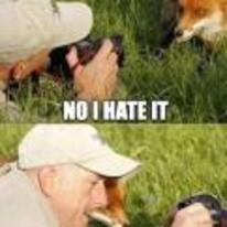 Radnom funny picture tags: fox picture no-take-it-again checking-out-picture selfie