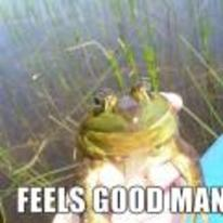 Radnom funny picture tags: frog happy made-up feels-good-man feels-good-bro