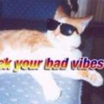 Currently trending funny picture tags: fuck-your-bad-vibes-bro cat shades cool bed