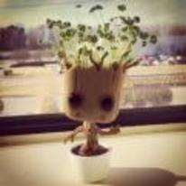 Radnom funny picture tags: guardians-of-the-galaxy chia-groot groot car dashboard