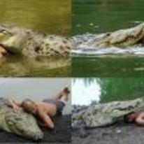 Radnom funny picture tags: guy playing with crocodile hugs