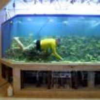 Radnom funny picture tags: guy swimming giant-fishtank living-room swim