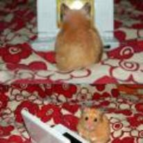 Radnom funny picture tags: hamster playing nintendo DS shocked