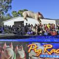 Radnom funny picture tags: happy pig racing jump australia