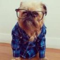 Radnom funny picture tags: hipster dog glasses shirt underground