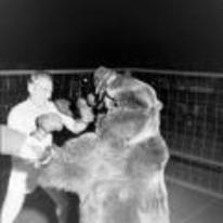 Radnom funny picture tags: historic black-and-white boxing bear vintage