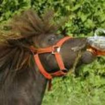 Currently trending funny picture tags: horse drinking beer downing pint