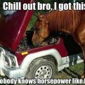 Radnom funny picture tags: horse fixing car chill-out I-got-this