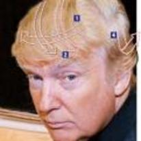 Radnom funny picture tags: how Donald-Trump comb-over works complex