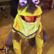 Radnom funny picture tags: hypno-toad cosplay costume frog hypno