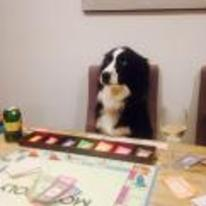 Radnom funny picture tags: i-have-no-idea-what-im-doing monopoly dog table act-normal