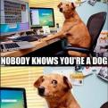 Radnom funny picture tags: internet nobody knows you dog