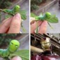 Radnom funny picture tags: iron-man bug caterpillar leaf look-a-like