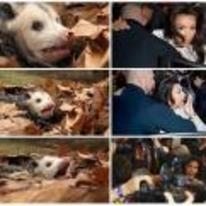 Radnom funny picture tags: kim-kardashian possum reaction scared shocked