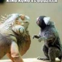 Radnom funny picture tags: king-kong vs godzilla early-years lizard