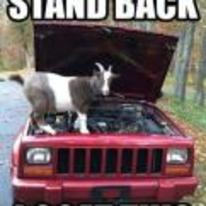 Radnom funny picture tags: macro engine goat stand-back-i-goat-this car