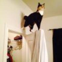 Radnom funny picture tags: majestic cat standing-on door frame
