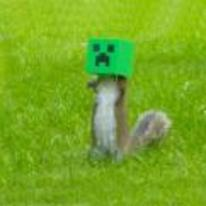 Radnom funny picture tags: minecraft squirrel feeder creeper need