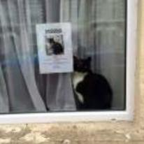 Currently trending funny picture tags: missing-cat window poster next-to-poster cat
