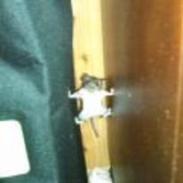 Radnom funny picture tags: mission-impossible mouse climbing behind-couch caught