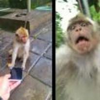 Radnom funny picture tags: monkey selfie arggh phone-selfie monkey-selfie