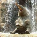 Radnom funny picture tags: most happy elephant ever waterfall