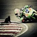 Radnom funny picture tags: motorbike corner cat random sup