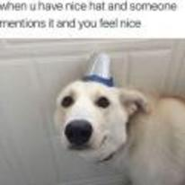 Currently trending funny picture tags: nice hat meme dog mentions-it-feel-nice