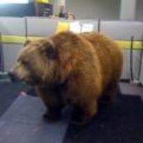 Radnom funny picture tags: office cubical bear work cube
