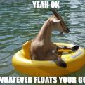 Radnom funny picture tags: okay whatever floats goat ring