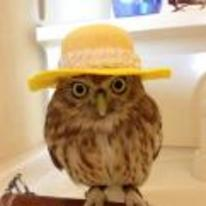 Radnom funny picture tags: owl wearing fancy hat classy