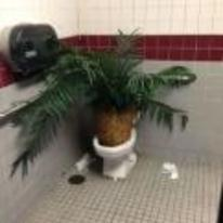 Radnom funny picture tags: plant toilet bowl dumped loo