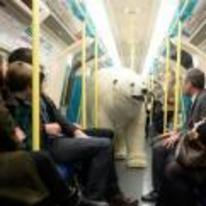 Radnom funny picture tags: polar-bear on-train tube subway random