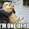 Currently trending funny picture tags: police pig stop im-one-of-you cop