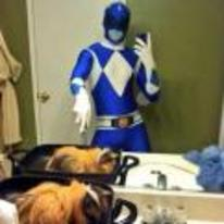 Currently trending funny picture tags: power-ranger selfie mirror guinea-pig cosplay