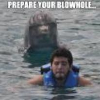 Radnom funny picture tags: prepare-your-blowhole dolphin swimming behind guy
