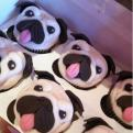 Radnom funny picture tags: pug cakes cupcakes pug-cakes dog
