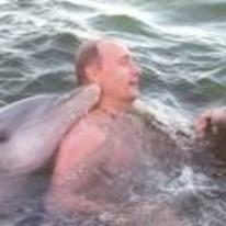 Radnom funny picture tags: putin vladimir-putin playing dolphins froliking