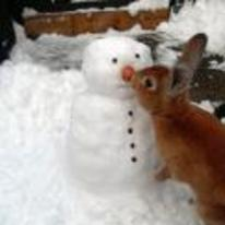 Radnom funny picture tags: rabbit eating snowmans nose carrot