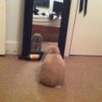 Radnom funny picture tags: rabbit staring mirror deep thinking
