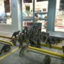 Radnom funny picture tags: raccoon black-friday storming-shop waiting-outside raccoons